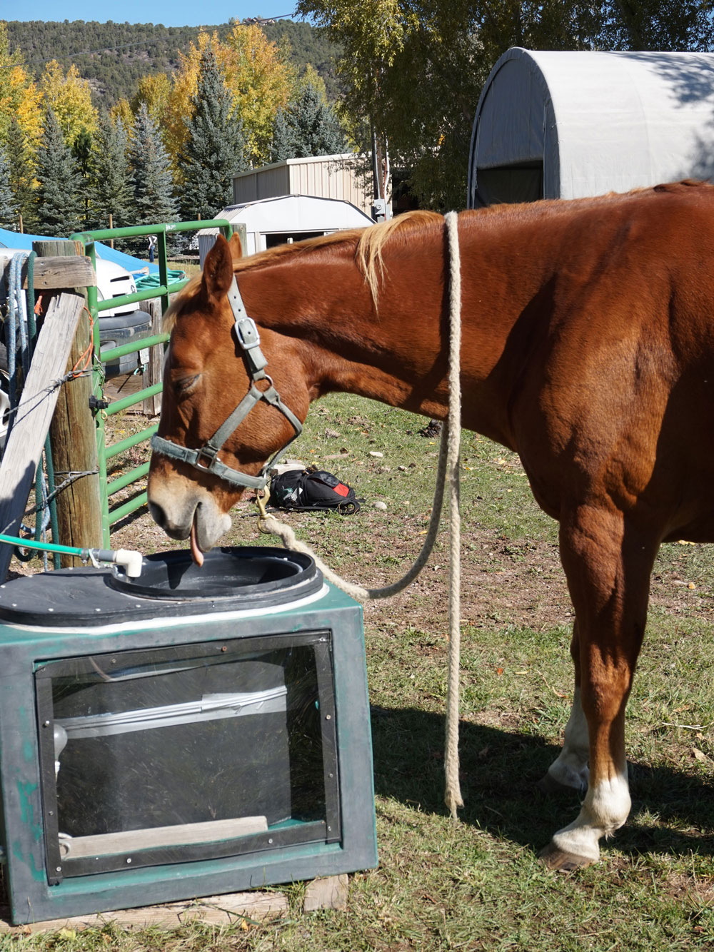 Mule drinks from a solar stock tank